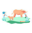 rescuers feed and treat indian bull vector image vector image