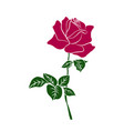 silhouette red rose vector image vector image