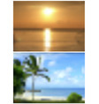 two blurred tropical backgrounds vector image