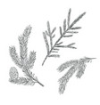spruce branch set collection of fir-tree vector image