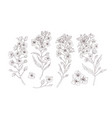 set detailed botanical drawings blooming vector image