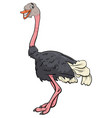 ostrich bird animal character cartoon vector image