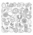 tropical fruits doodle set vector image vector image