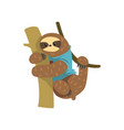 funny sloth in blue t shirt hanging on the tree vector image vector image