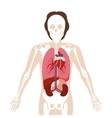 half body man with inner organs and bones vector image