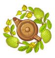 soursop tea vector image