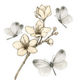 vintage cherry blossom branch surrounded gray vector image