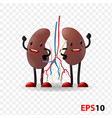 kidneys human internal organ characters vector image vector image