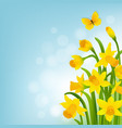 spring cart with narcissus vector image vector image