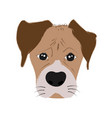 boxer dog cute head and expression face - hand vector image vector image