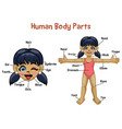 cartoon model girl with body parts name vector image