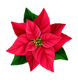 christmas star decorative poinsettia flower vector image vector image