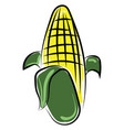 corn on white background vector image vector image