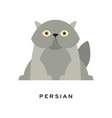 fluffy gray persian cat adorable long-haired vector image vector image