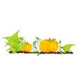 pumpkins grow in a garden vector image
