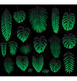 set tropical leaves on black vector image vector image