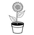 sunflower in pots vector image