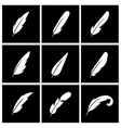 feather on black background vector image