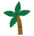 cute coconut tree on white background vector image vector image