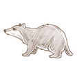 forest badger isolated sketch wild animal vector image vector image