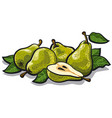 fresh tasty pears vector image
