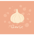 Garlic Vegetable vector image vector image