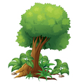 A big tree vector image vector image