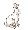 hare rabbit or bunny isolated sketch drawing vector image vector image