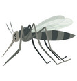 mosquito on white background vector image