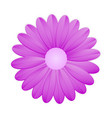 purple flower on white background vector image vector image