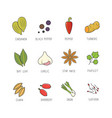 set of culinary spices and herb for your vector image