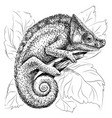 chameleon a graphic black-and-white portrait vector image vector image