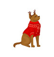 dog wearing red holiday sweater and reindeer horn vector image vector image