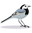 wagtail bird vector image vector image