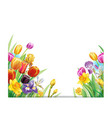 bouquet with multicolor spring flowers vector image vector image