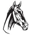 decorative portrait of trakehner horse vector image vector image