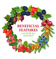 Fresh Natural Berries Wreath Decorative Frame vector image vector image