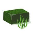 frozen spirulina block vector image vector image
