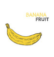 hand drawn banana fruit isolated on white vector image