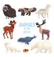 arctic animals set polar fox bison raccoon dog vector image vector image