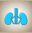 human anatomy kidneys sign sky blue icon vector image