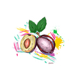 plums with colorful splashes vector image vector image