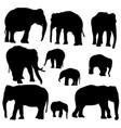 set of elephants vector image vector image
