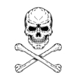 a skull and crossbones vector image vector image