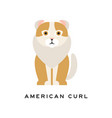 american curl cat purebred pet with curled ears vector image vector image