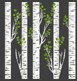 birch trunks in night vector image
