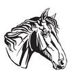 decorative portrait of trakehner horse-4 vector image vector image