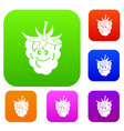 ripe fresh smiling raspberry set color collection vector image vector image