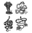 vintage snake set royal python with skull and vector image