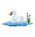 Cartoon beauty swan floats on water vector image vector image